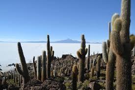 Andean Circle