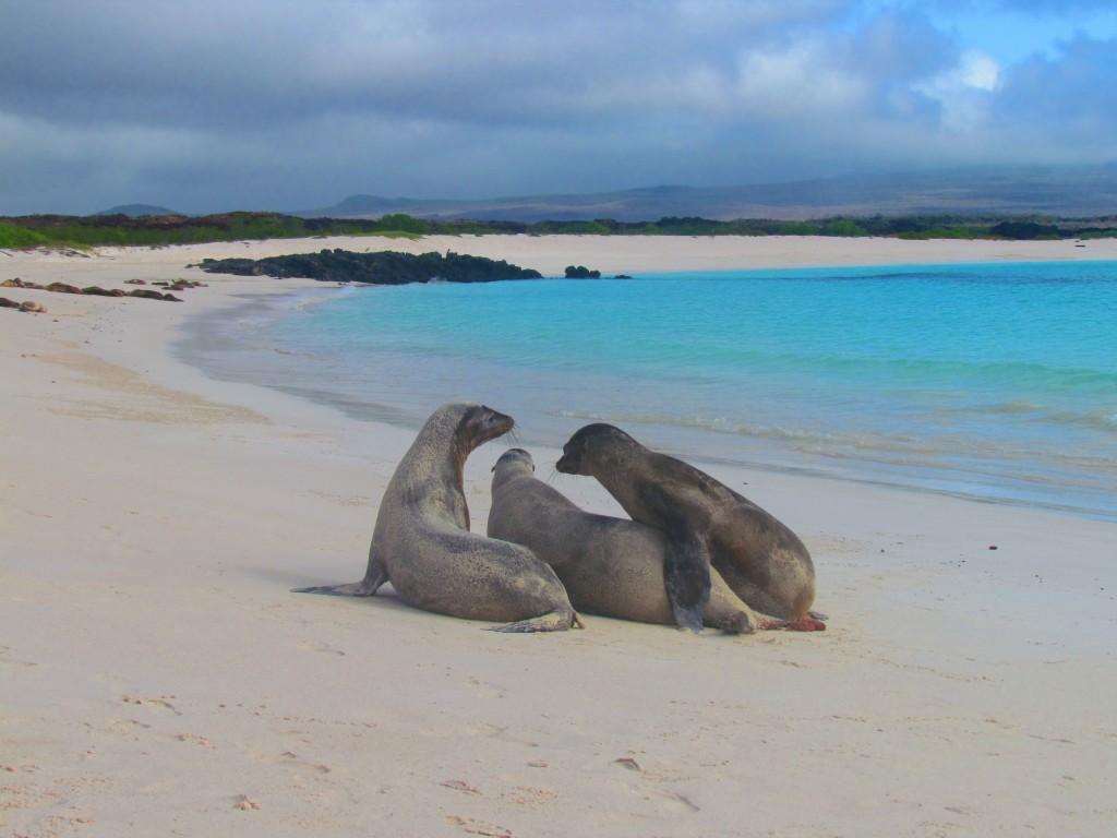 Galápagos Auténtico