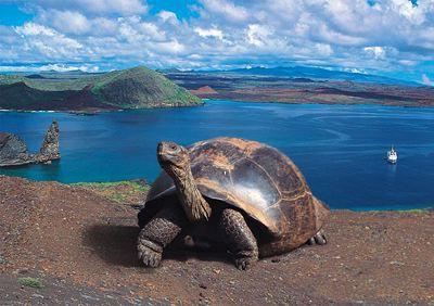 Andes, Costa y Galápagos