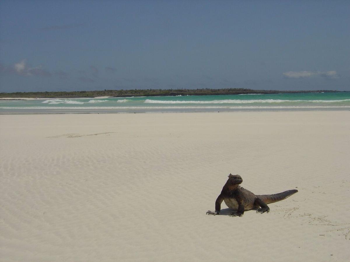 Galapagos Clásico