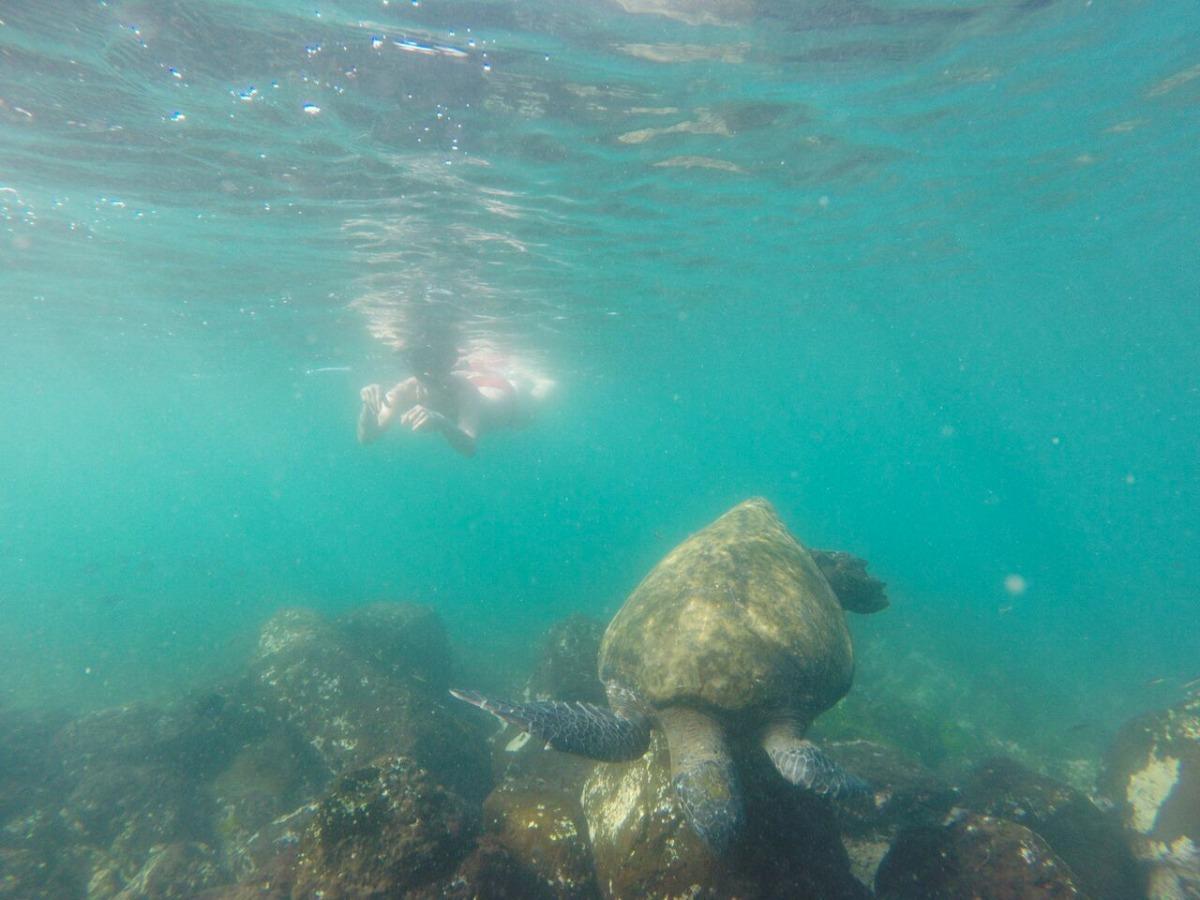 Buceo en Galápagos